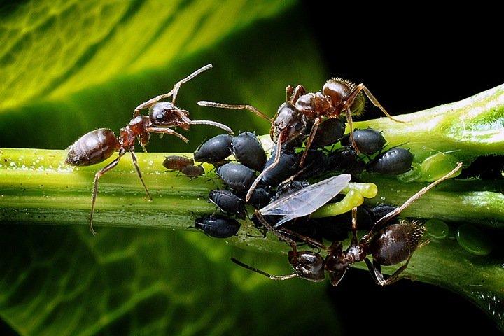 Антибиотик из муравьев, искусственные кости и лекарство от старости. Открытия года в медицине