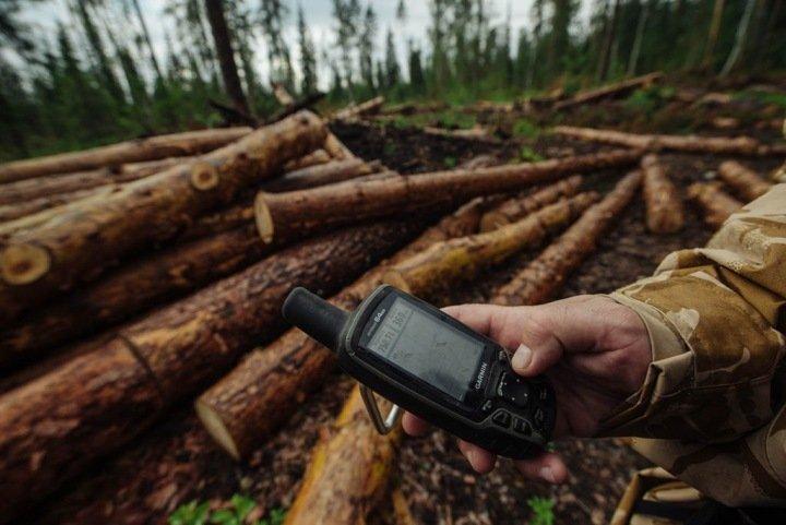 Алтайские чиновники незаконно продали 168 млн кв. метров леса