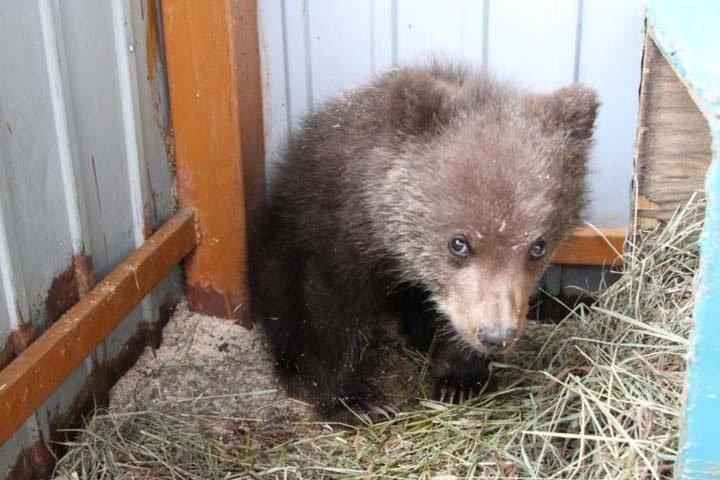 Троих медвежат подкинули в приют для животных в Иркутске