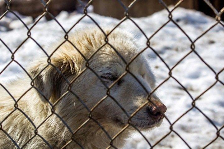 Режим ЧС ввели в Красноярске из-за бродячих собак