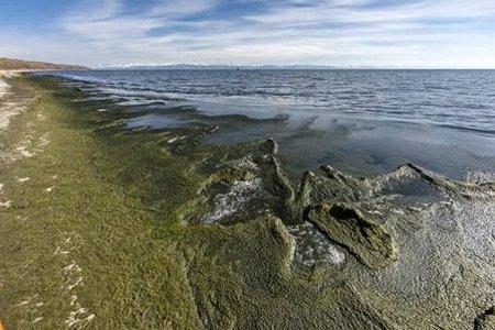 Ученые отвергли гипотезу о чужеродности спирогиры Байкалу