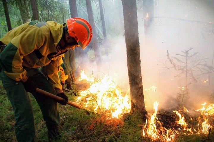 Числа недели: новые пожары в Сибири и трехгодичный запас масок
