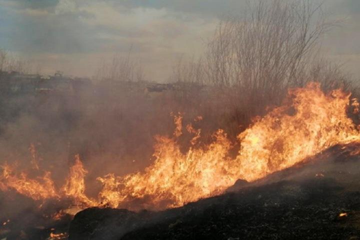Читинцы сняли возможного поджигателя травы около жилья