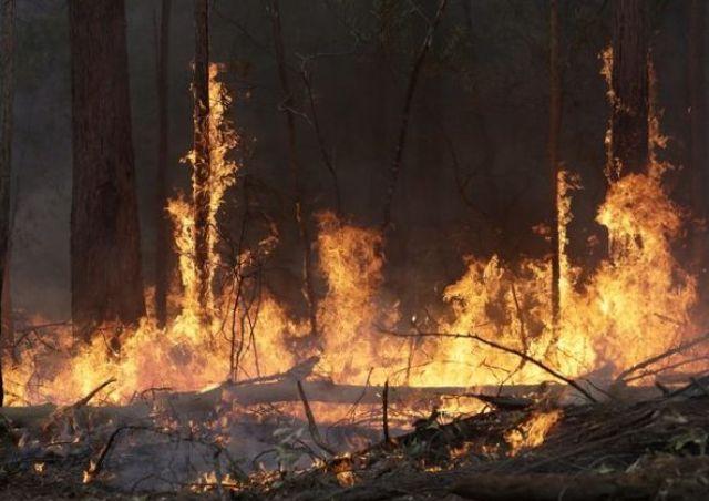 Кто и зачем поджигает леса в Чернобыле