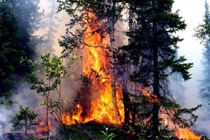 Более 24,5 тыс. га леса горят в Сибири