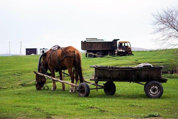 Более 90 новосибирских сельхозкомпаний остались без господдержки. Депутаты пожалуются Патрушеву