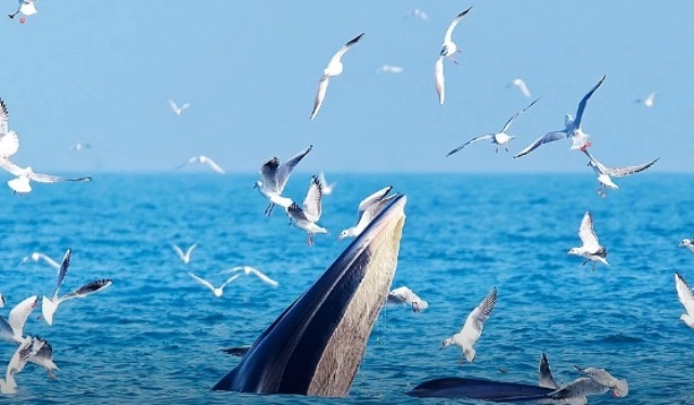 Почему киты радуются, что у людей карантин