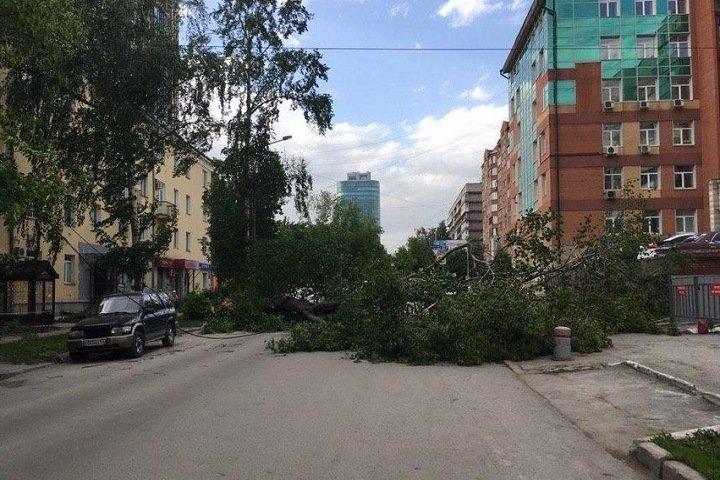 Упавшее из-за урагана дерево перекрыло улицу в центре Новосибирска. Фото