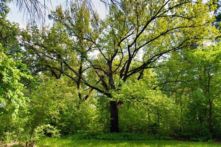 Кто ждет туристов на Байкале и зачем в Барнауле крадут деревья. Сибирь за неделю