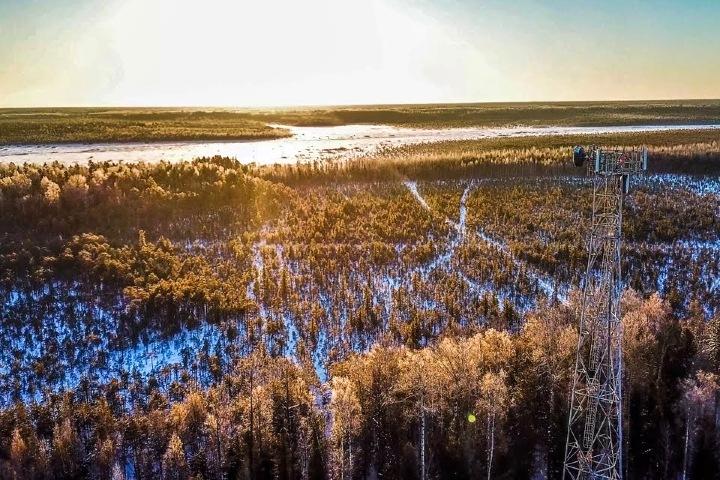 Счетная палата: данные чиновников о лесах Сибири давно устарели