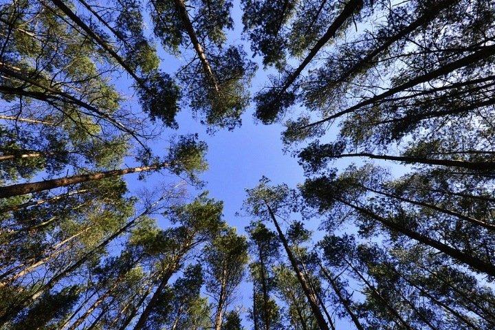 Прокуратура вернула статус городских лесов территории в 1,2 га в Новосибирске