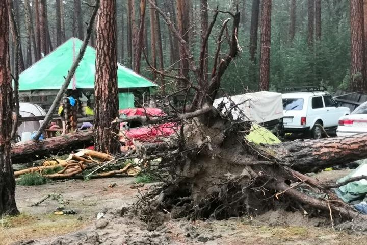Красноярская прокуратура назначила проверку после смерти девушки под упавшим деревом