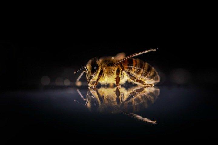 Массовая гибель пчел произошла в Алтайском крае