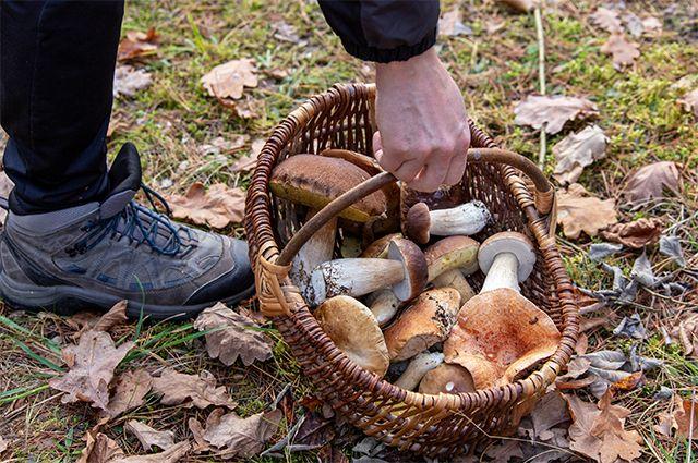 Снимаю шляпку: грибы – это не только еда, это ещё и лекарство