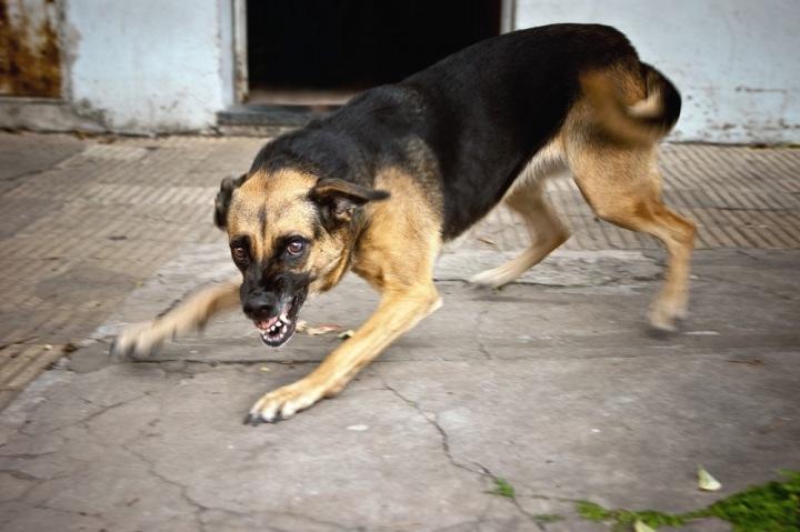 Уголовное дело возбуждено после нападения бездомной собаки на ребенка в Забайкалье