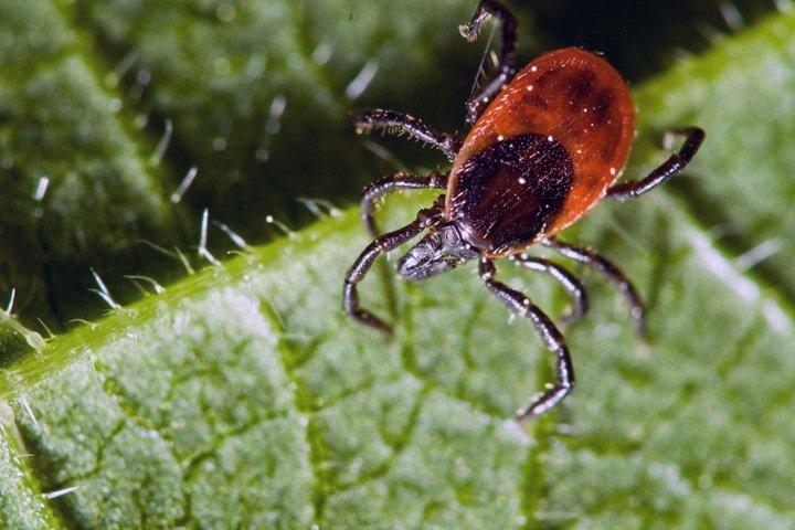 Ученые нашли в России нового паразита. Наука за неделю
