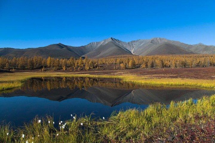 Сибирь стала чаще гореть, пузырьки воздуха очистят северные реки от нефти. Наука недели