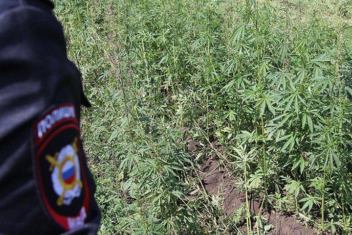 Главу отдела забайкальского МЧС задержали с марихуаной