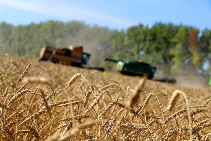 Зерно дорожает, тарифы растут. Числа недели
