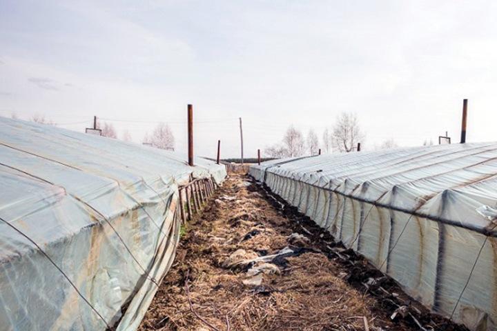 Жителей Узбекистана обвинили в нападениях на китайцев в новосибирских теплицах