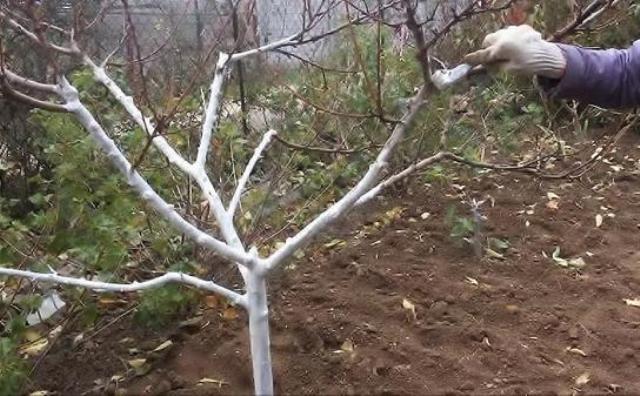Забота о деревьях. Готовим свой сад к холодам