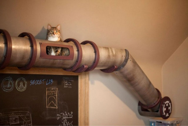 Кошачья мебель: какой дизайн любят коты