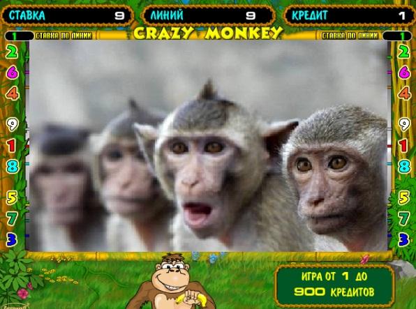 Проверено временем: почему Crazy Monkey всегда в топе