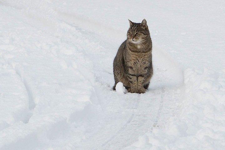 Мокрый снег, ветер и гололед ждут новосибирцев