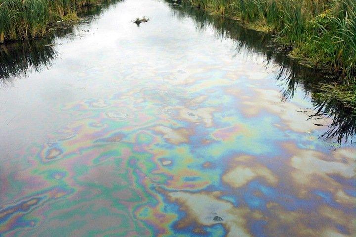 Чиновники объяснили загрязнение рек Новосибирска природой