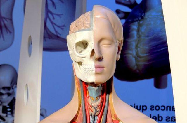 5 важных загадок человеческого тела
