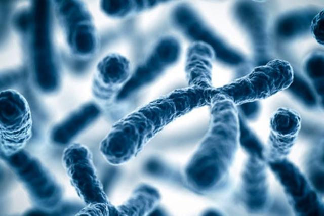Увеличить теломеры: Ученые придумали, как продлить жизнь