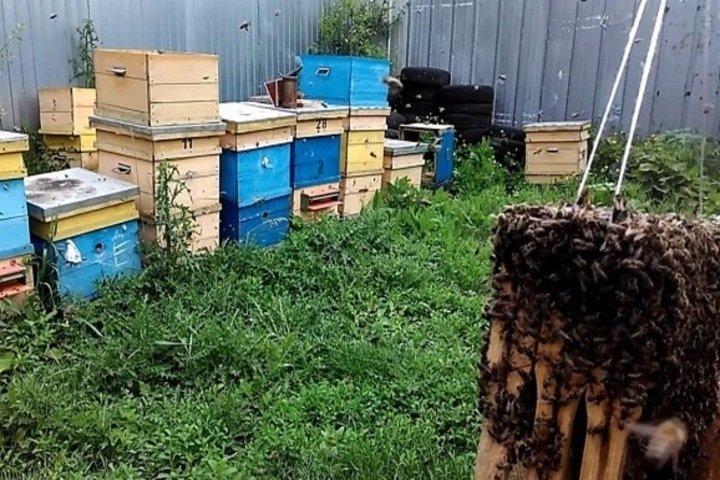 Как алтайская семья отсудила 60 тыс. за укусы «миролюбивых» пчел