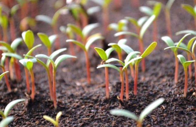 Благоприятные дни: когда садить рассаду в 2021 году, чтобы она дала хороший урожай