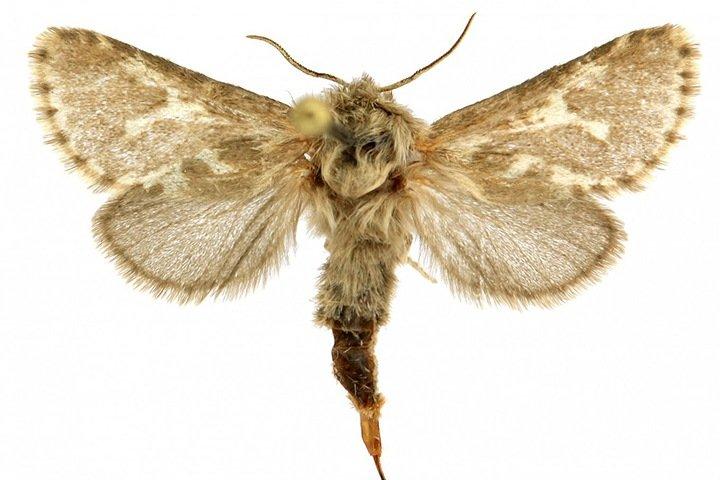 Сибирские ученые нашли новый вид бабочек на Алтае