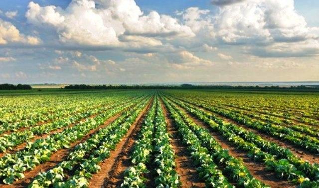 Захист рослин: фунгіциди – ефективний засіб проти грибків і бактерій