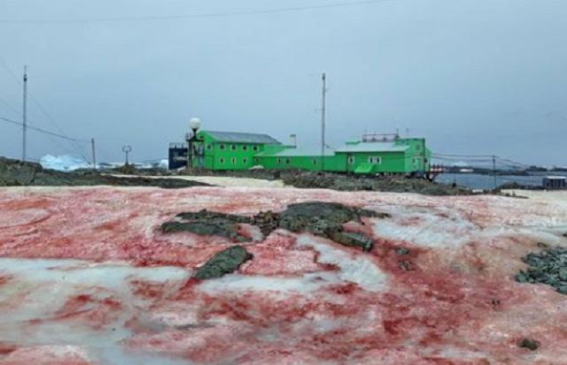 Опасный признак: почему на украинской станции в Антарктиде снег стал красным