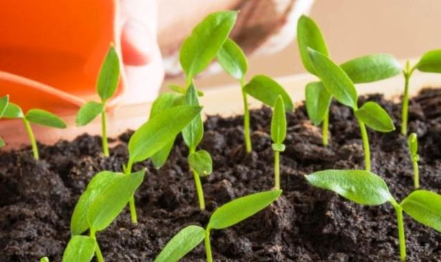 Лунный календарь: когда сеять на рассаду перец, помидоры и баклажаны в 2021 году