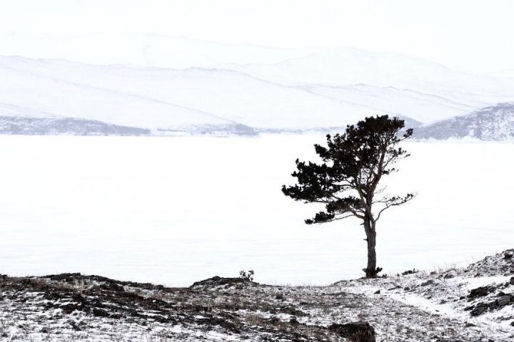 Фотографии Байкала, томские болота и бурятские рецепты. Сибирь за неделю
