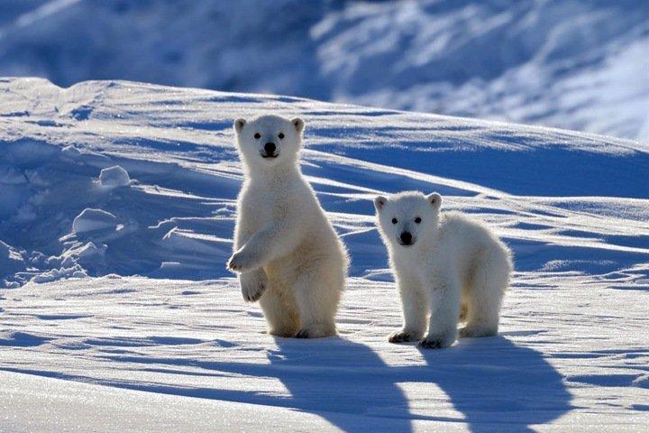 Глобальное потепление сделало россиян агрессивнее