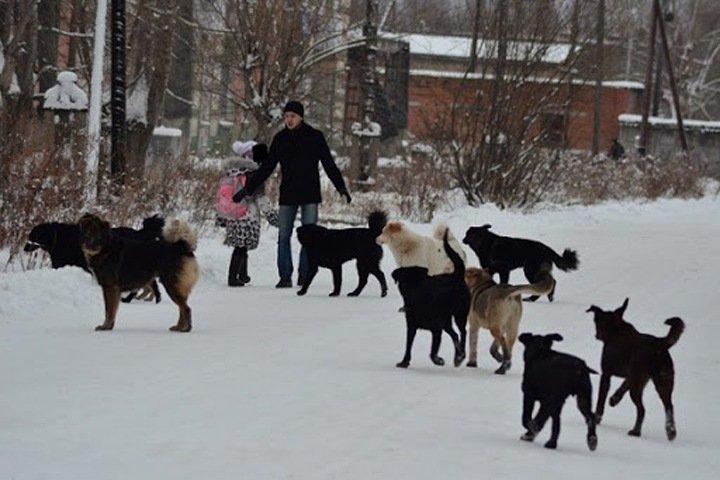 Родственники рассказали о состоянии искусанной собаками жительницы Улан-Удэ