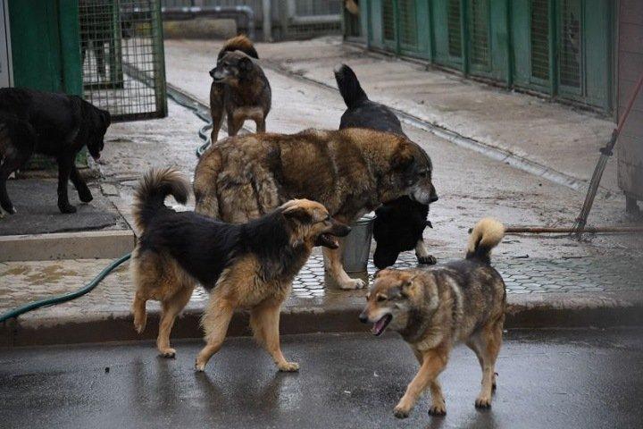 Налог и выдачу разрешений на собак предложили ввести в Бурятии