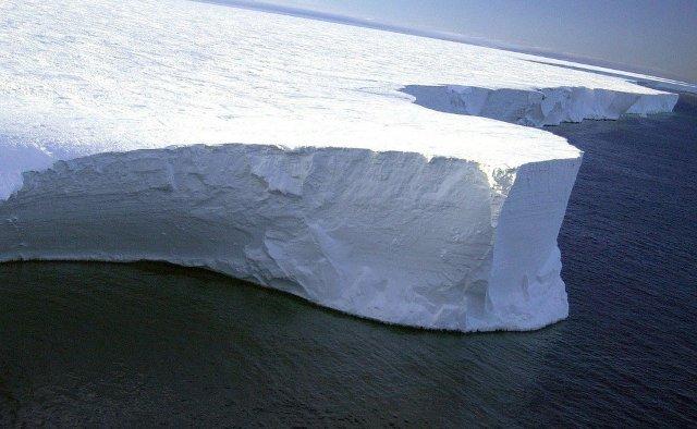 Ученые обнаружили в Антарктиде необычные существа