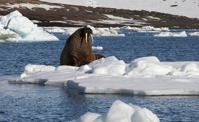 Горячая Арктика: почему на севере резко теплеет
