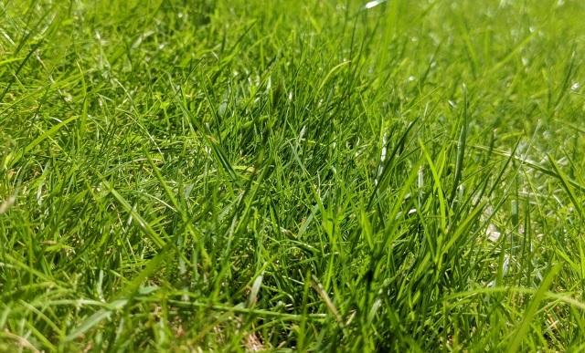 Какую траву сеять в саду: проверенные травосмеси