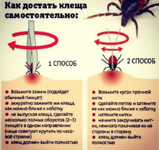 В Украине наступил сезон клещей: полезные советы, которые сохранят жизнь