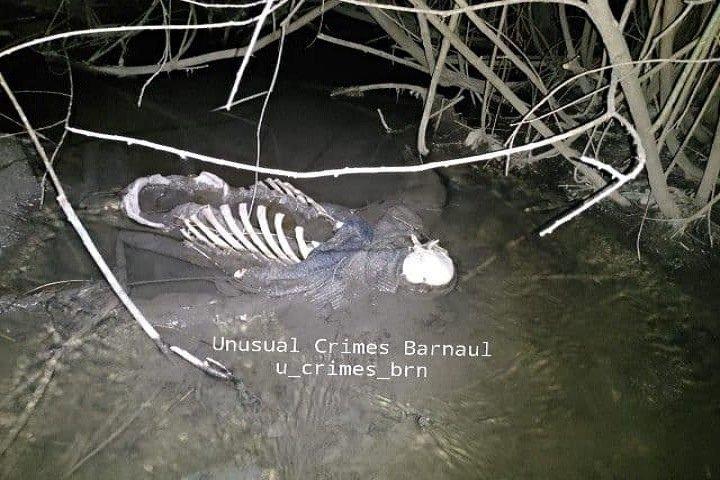 Оттаявший скелет обнаружили в парке Барнаула