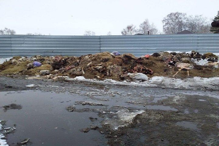 Новосибирское село задыхается из-за отходов мясокомбината