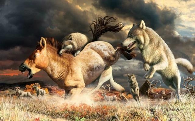 Палеонтологи выяснили, что помогло волкам пережить ледниковый период