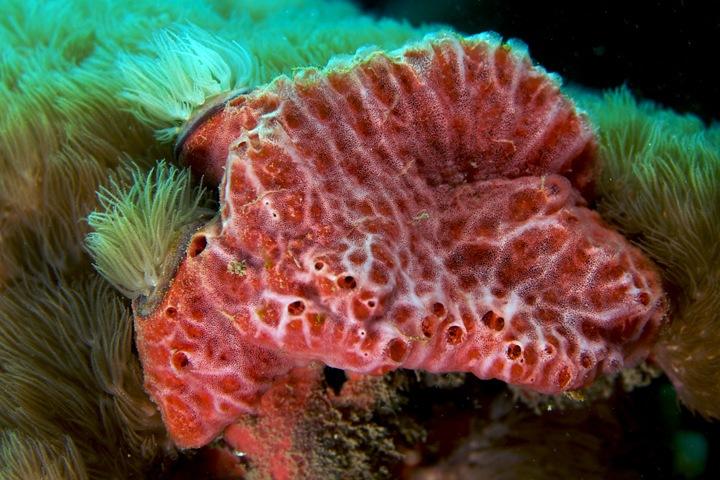 Морская губка поможет лечить рак