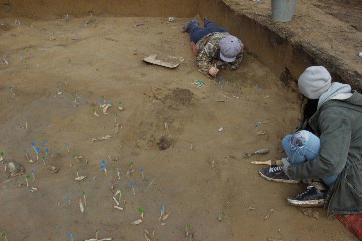 Археологи обнаружили останки мамонта в центре Красноярска
